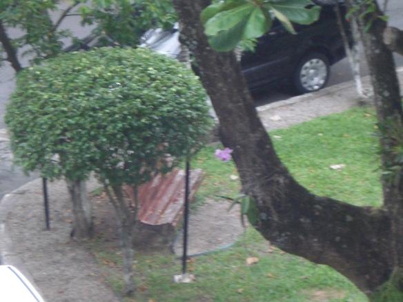 Orquídea solitária