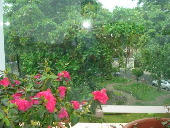 Plantas da varanda